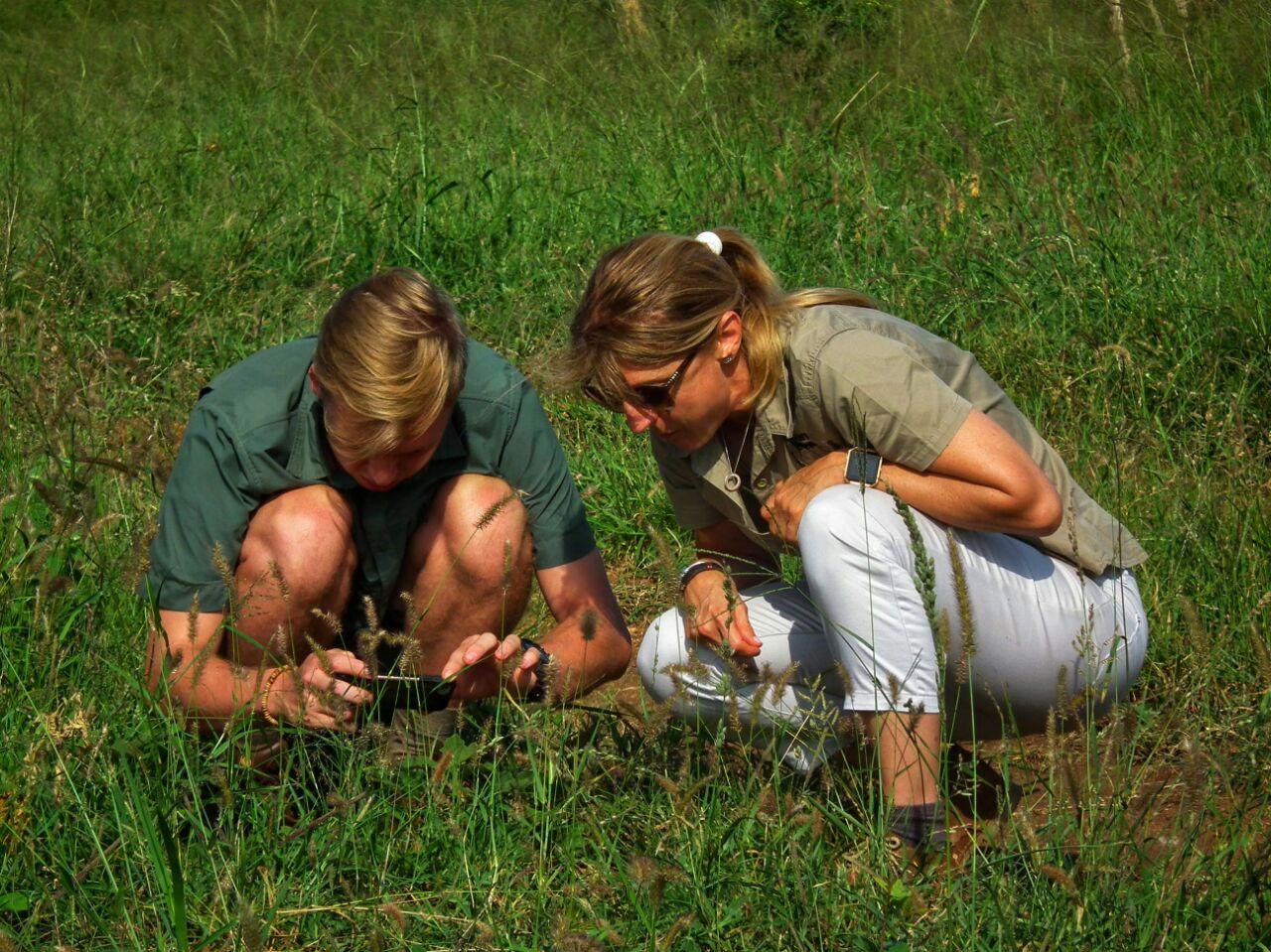 Examining veld flowers