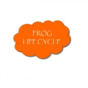 FrogLifeCycle Pg