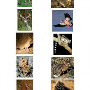 Spoor Guide pictures Pg3